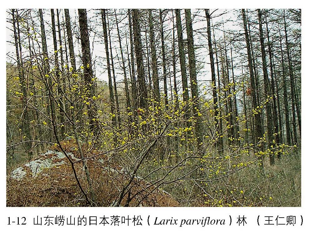寒温带和温带山地针叶林