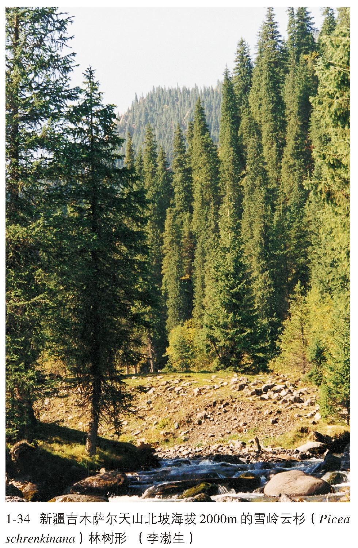 雪岭云杉林内混交或伴生的乔木树种不多,伴生的阔叶树种有和,但并不