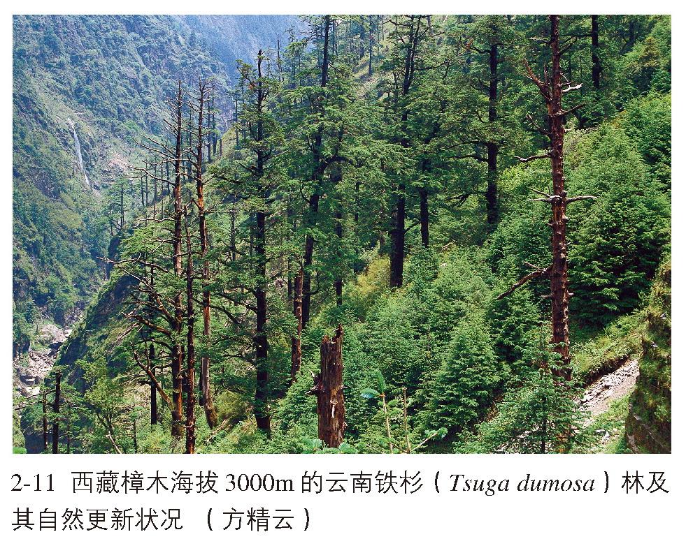 亚热带山地针叶,常绿阔叶,落叶阔叶混交林