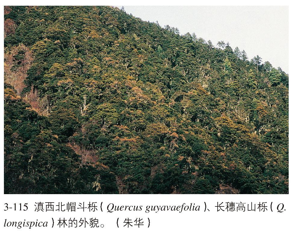 亚热带硬叶常绿阔叶林