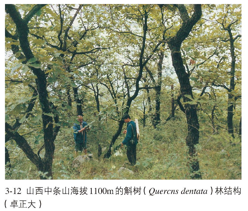 温带落叶阔叶林