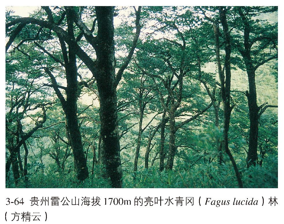 亚热带常绿,落叶阔叶混交林