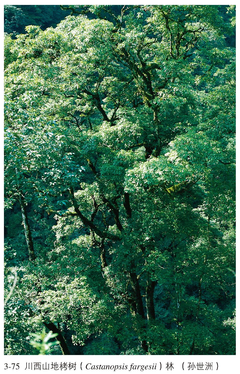 本类型也是中亚热带常绿阔叶林的