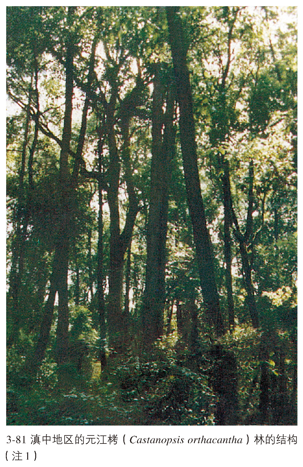 亚热带常绿阔叶林