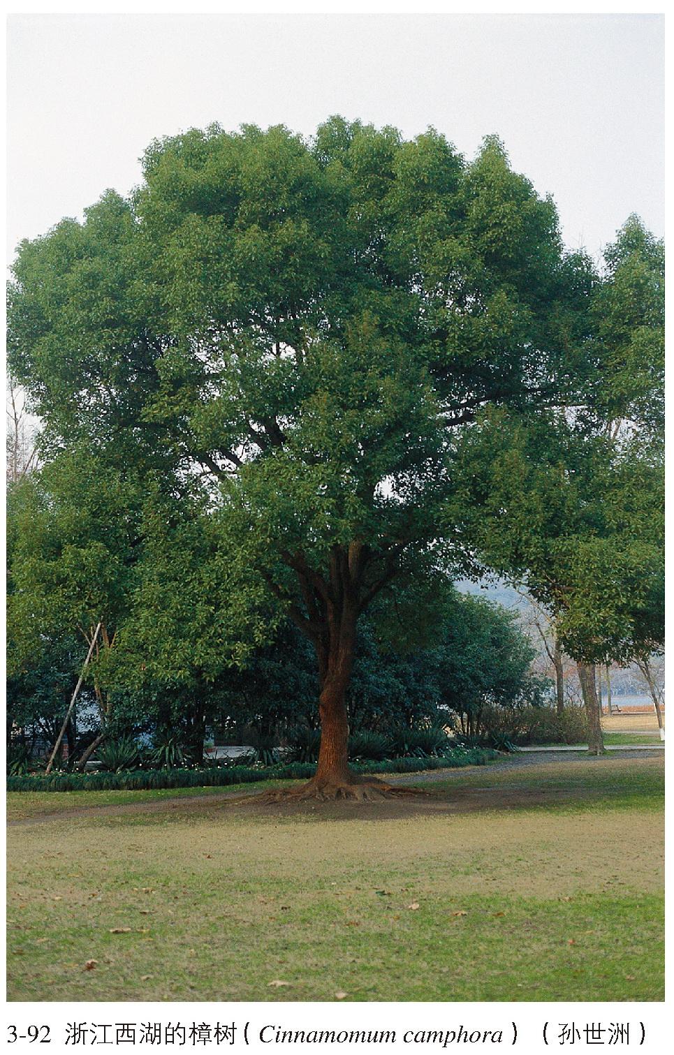 亚热带常绿阔叶林在我国分布很广,大致分布在北纬23°40′ ~32°,东经