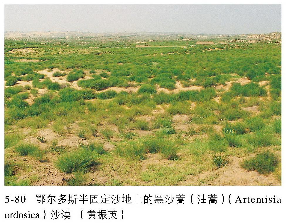 沙漠植被简笔画